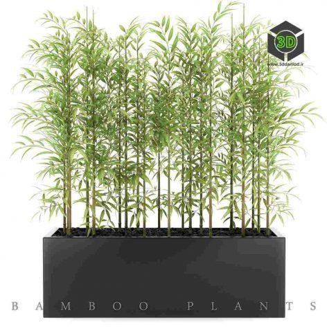 Bamboo Plants black box (3ddanlod.ir) 001