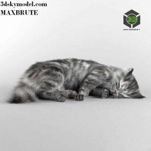 Cat model(3ddanlod.ir) 114