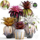 Collection of Plants 153 Bromelia(3ddanlod.ir) 080