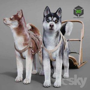 Dog Team Huskies Sled Pulka(3ddanlod.ir) 051
