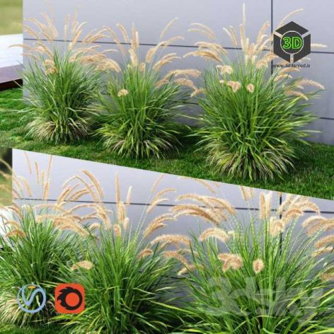 Ornamental Grass Fountaingrass Green(3ddanlod.ir) 028