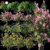 Set Flowering Shrubs 4(3ddanlod.ir) 177