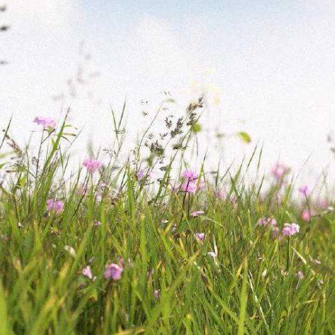 grass filed with flower 005 (3ddanlod.ir)