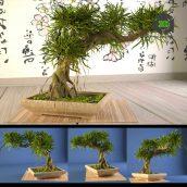 Bonsai 3(3ddanlod.ir) 061