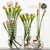 Calla Lily 3(3ddanlod.ir) 085