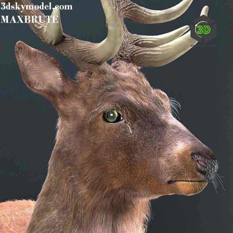 Resting Deer(3ddanlod.ir) 122