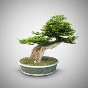 vase bonsai 003 (3ddanlod.ir)