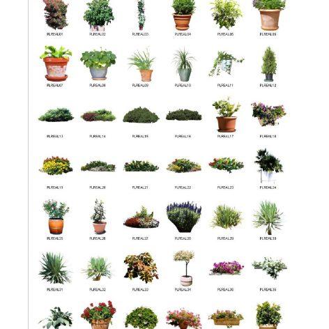 VizImages-Plants (3ddanlod.ir)_000001