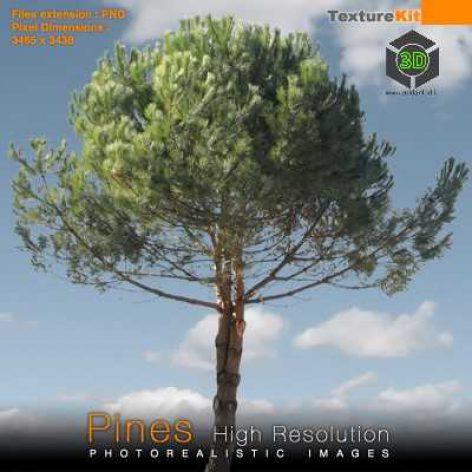 s_pine05 (3ddanlod.ir)