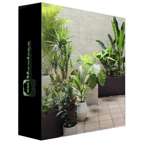 Maxtree - Plant Models Vol 19 (3ddanlod.ir)