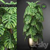 Plants 105(3ddanlod.ir) 351