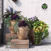 Summer in Pots(3ddanlod.ir) 015