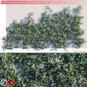 Trachelospermum Jasminoides Star Jasmine on wall 3D model (3ddanlod.ir) 280
