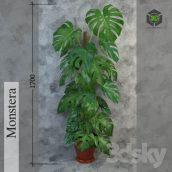 Monstera(3ddanlod.ir) 591