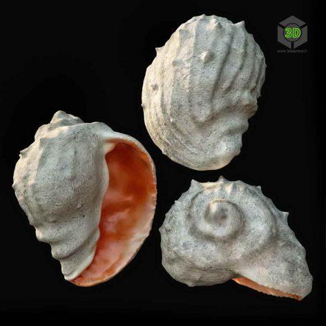 shell (3ddanlod.ir)