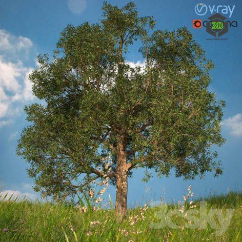 3D Model of a Tree No 1(3ddanlod.ir) 825