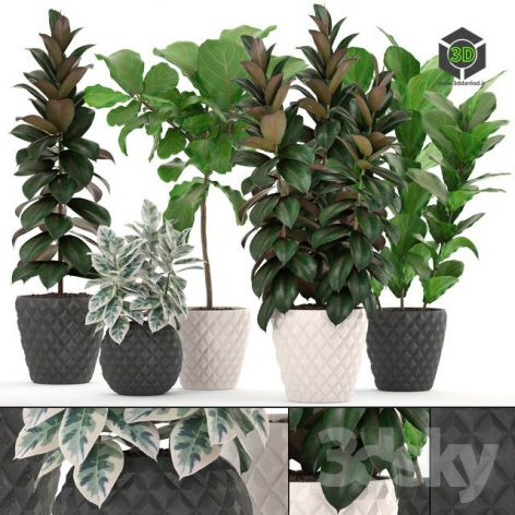 Collection of Plants 212 FICUS SET(3ddanlod.ir) 1176