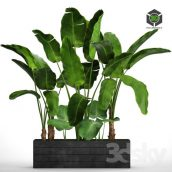 Collection of Plants 73 Tropical Plants(3ddanlod.ir) 629
