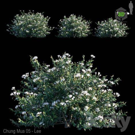 Common Bush(3ddanlod.ir) 1625