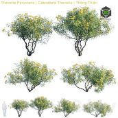 Thevetia Peruviana , Cascabela Thevetia (max, fbx) (3ddanlod.ir) 166