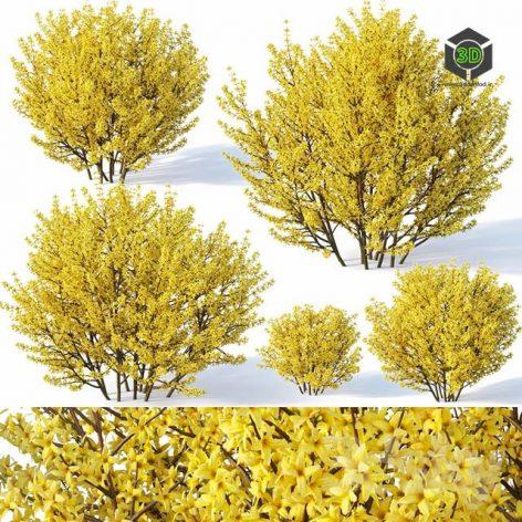 Forsythia 1 Full Bloom(3ddanlod.ir) 1482