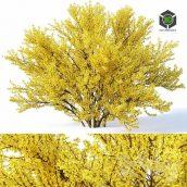 Forsythia 4 Full Bloom H220(3ddanlod.ir) 1497
