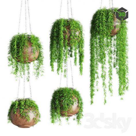 Hanging Plants in Pots(3ddanlod.ir) 981