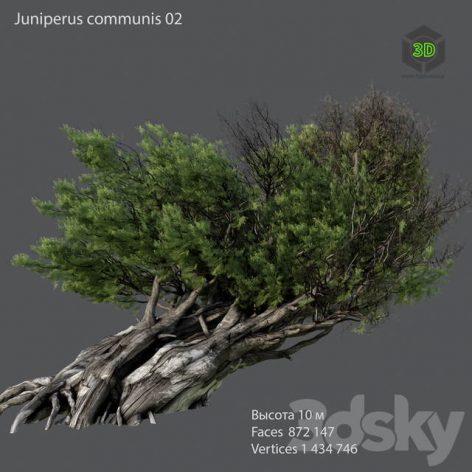Juniper Ordinary 02(3ddanlod.ir) 1603