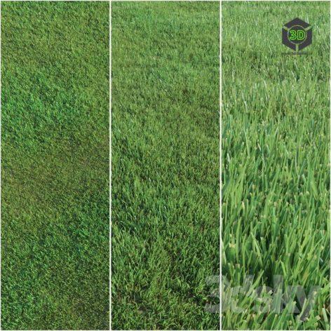 Lawn Grass(3ddanlod.ir) 849