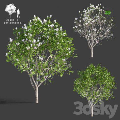 Magnolia Sulange(3ddanlod.ir) 1437