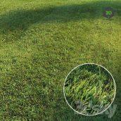 Mowed Lawn(3ddanlod.ir) 3699