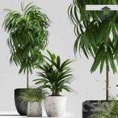 PLANTS 134(3ddanlod.ir) 3379