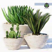 PLANTS 150(3ddanlod.ir) 3425