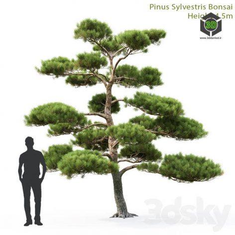 Pine Bonsai 1(3ddanlod.ir) 3722