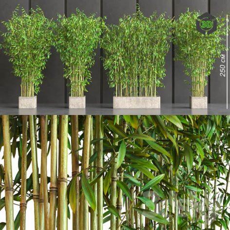 Potted Bamboo(3ddanlod.ir) 3396