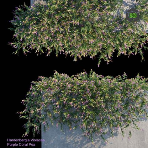 Purple Coral Pea Creeper(3ddanlod.ir) 4025
