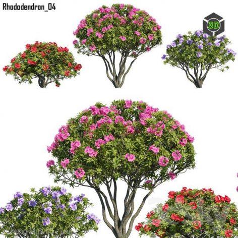 Rhododendron 04(3ddanlod.ir) 3783