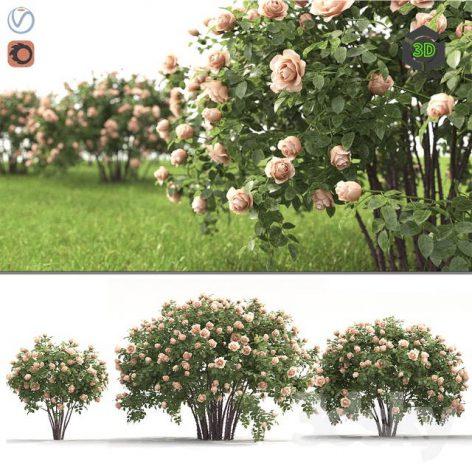 Rose Bush(3ddanlod.ir) 3393
