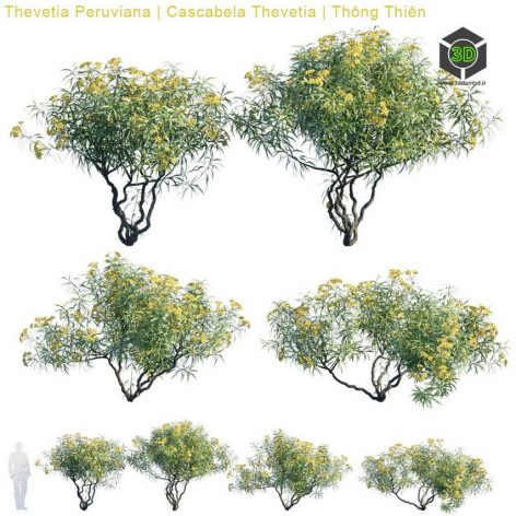 Thevetia Peruviana Cascabela Thevetia(3ddanlod.ir) 2795