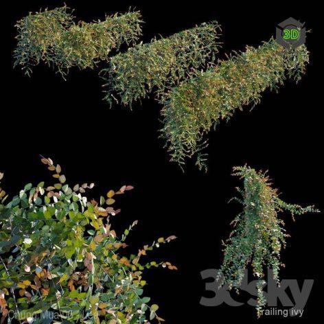 Trailing Ivy 3(3ddanlod.ir) 2721