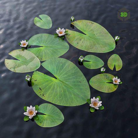 Water Lily(3ddanlod.ir) 2848