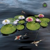 Waterlily 2(3ddanlod.ir) 2889