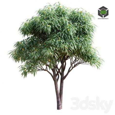 Deciduous Tree With Fruit Medlar(3ddanlod.ir) 690