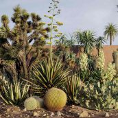Maxtree - Plant Models Vol 17 cover (3ddanlod.ir)