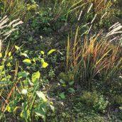 Maxtree - Plant Models Vol 21 cover (3ddanlod.ir)