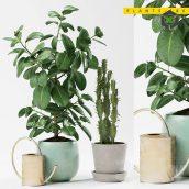 PLANTS 186(3ddanlod.ir) 2107