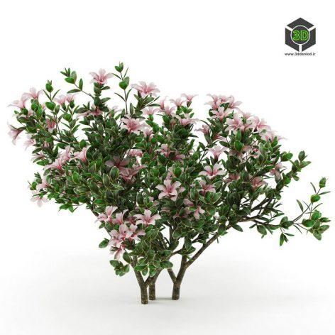 Serissa Foetida Flora(3ddanlod.ir) 2415