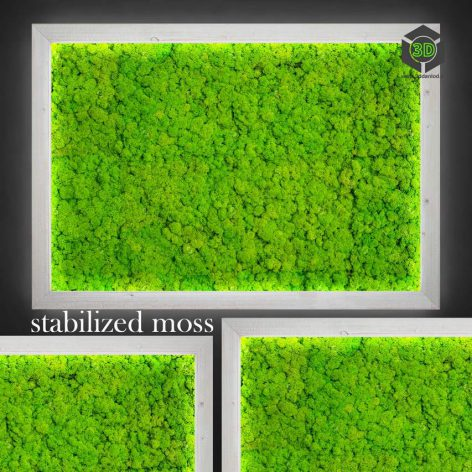 Stabilized Moss(3ddanlod.ir) 2238