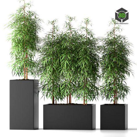 Bamboo Plants 20(3ddanlod.ir)838