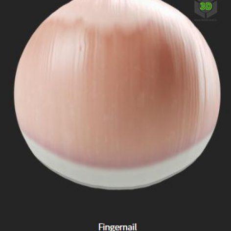 fingernail (3ddanlod.ir)